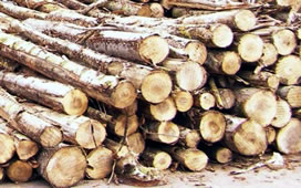 wood fuel log pile