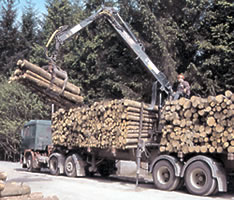 logs-for-wood-fuel